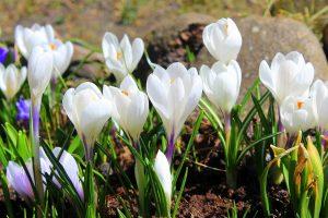 Kevät ja hyvä mieli